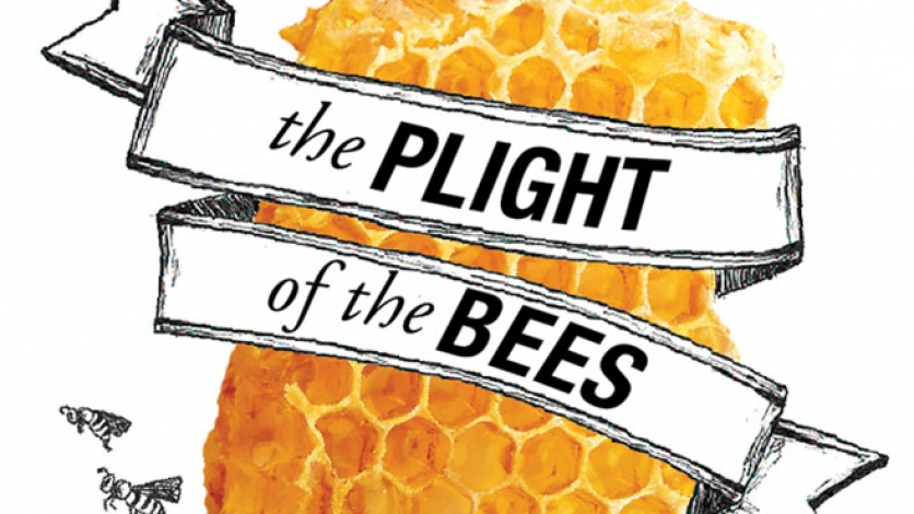 Plight of the Bees