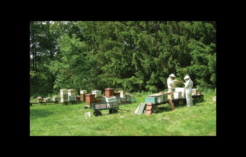 Meet The Beekeepers