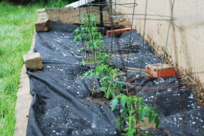 Pittsburgh Urban Gardening Project
